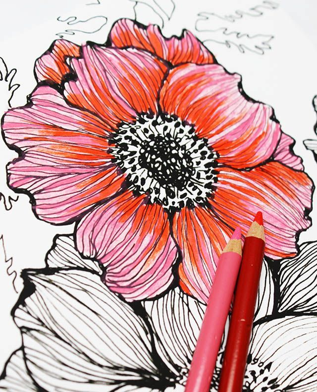 how to draw a tulip with colored pencils