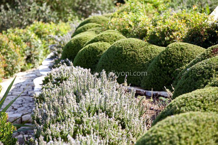 Villa Amalthea gardens Landscaping & design by @alitheaj