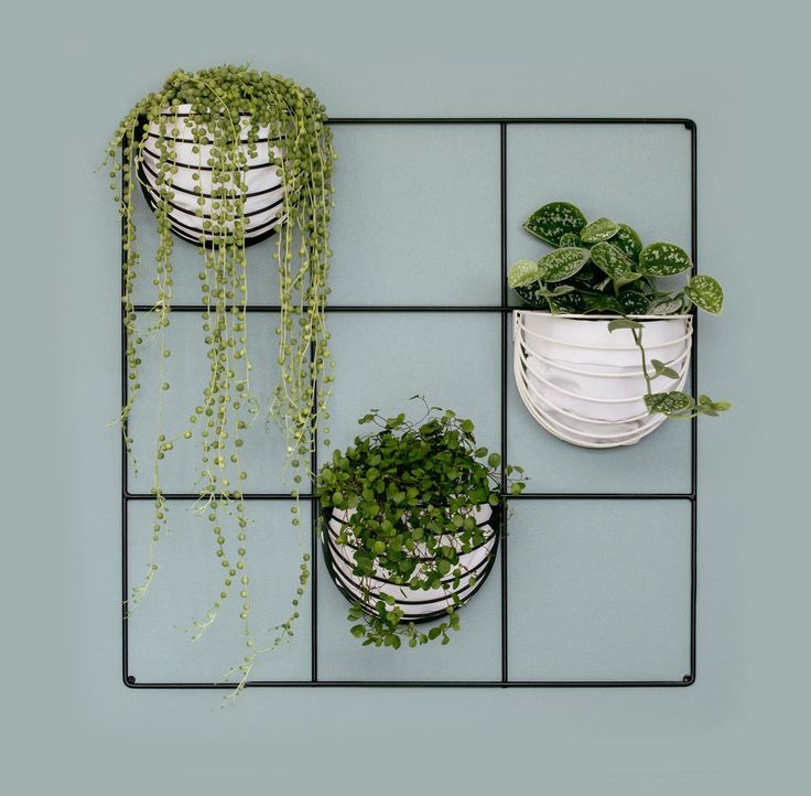 9 Square Grid and baskettes green wall with string of pearls plant by Wallment - Finnish Design
