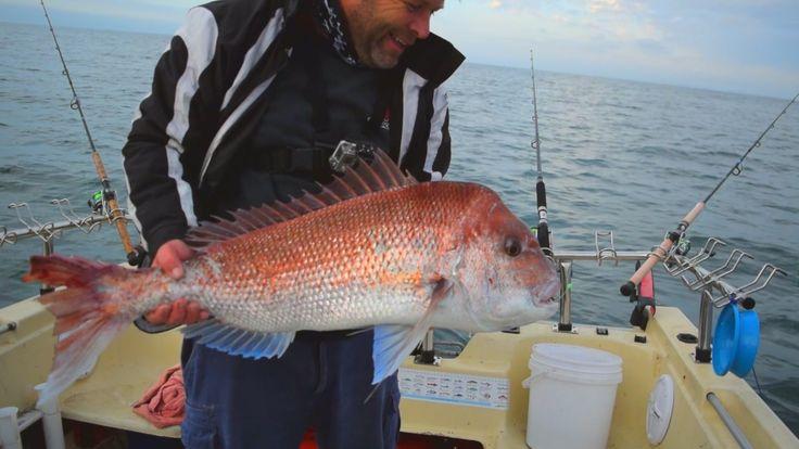An Australian Snapper Caught On Reedy's Rigz Fishing Rig P.B Port Phillip bay Reds Snapper Fishing Tackle Snapper Snatchers Fishing Rigs