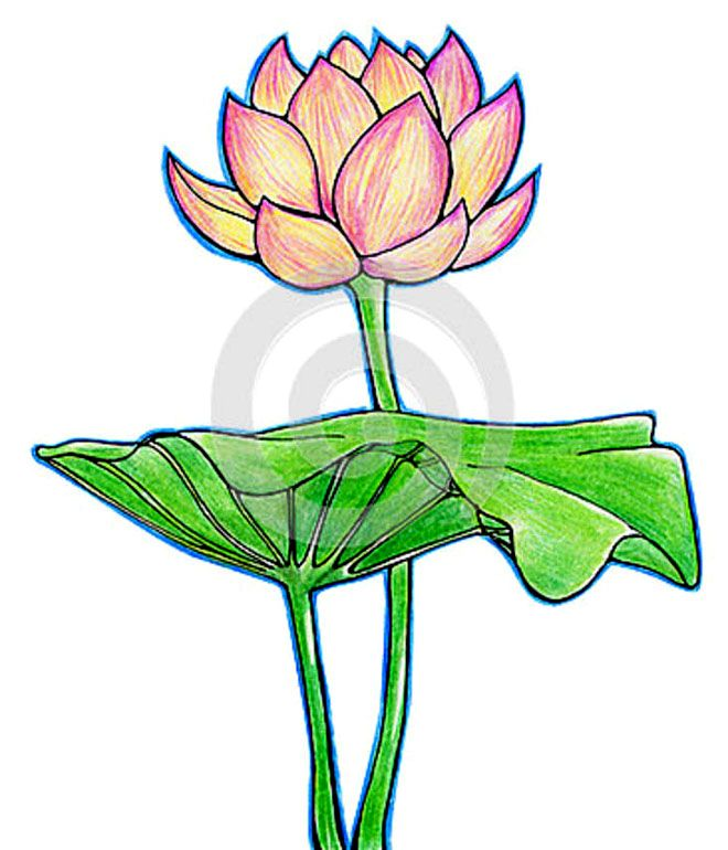 45 Beautiful Flower Drawings And Realistic Color Pencil
