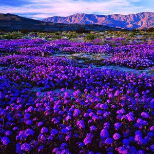 Hiking in Anza Borrego desert is needed