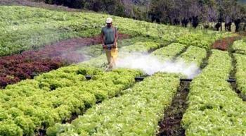 Plaguicidas: Enemigo invisible - EcoPortal.net