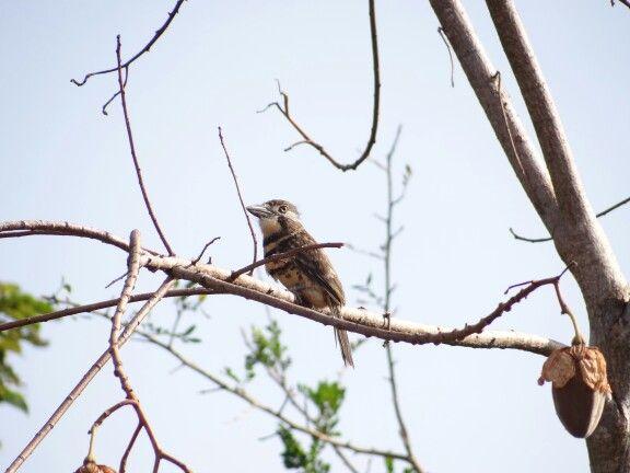 Aves del llano