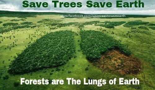 Lungs of the earth 1011719_632918786721338_340016582_n.jpg (500×291)