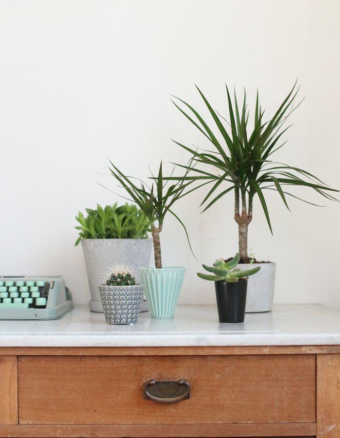Styling mit Drachenbaum - schöne Übertöpfe von House Doctor und Bloomingville - 23qm Stil
