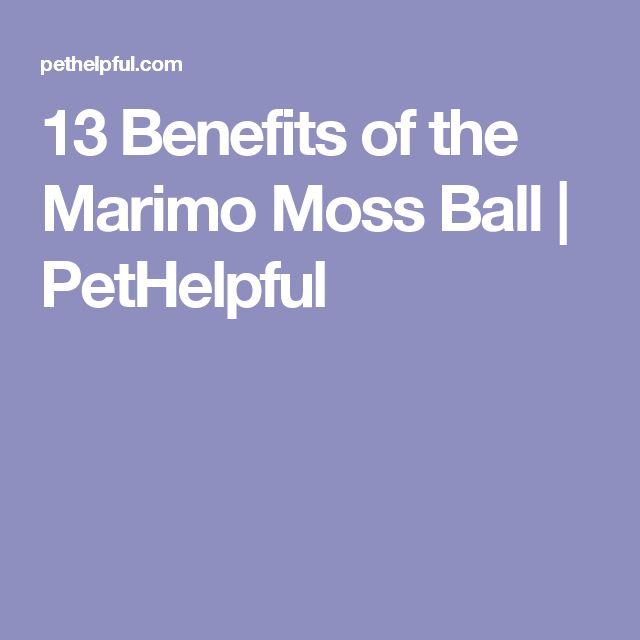 13 Benefits of the Marimo Moss Ball | PetHelpful