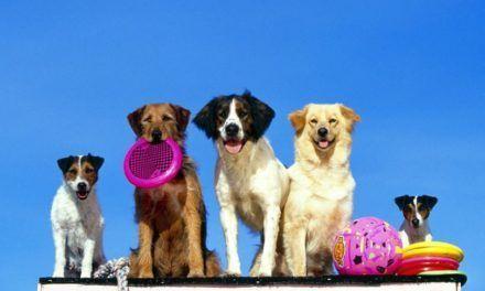 Come divertirti e inventare nuovi giochi con il tuo cane Consigli pratici per divertirsi con il proprio cane inventando nuovi giochi. Quando si gioca con il proprio cane il legame si rafforza e si entra in sintonia. In questo articolo ci sono 2 consigli pr #cane #consigli #giochi #olfatto