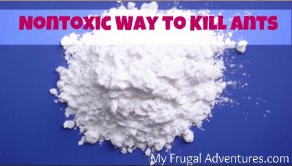 Nontoxic Method to Kill Ants ~ sprinkle Corn Starch along path that the ants take!