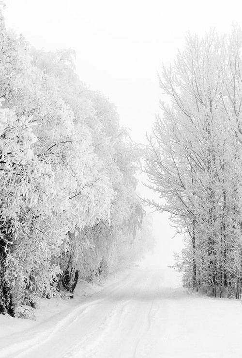 """Winter *❄️~*.Wishes & Dreams.*~❄️* """"…there's just something beautiful about walking on snow that nobody else has walked on. It makes you believe you're special, even though you know you're not."""" ~ Carol Rifka Brunt, Tell the Wolves I'm Home"""