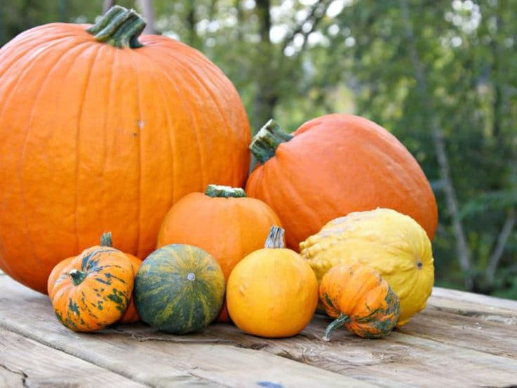 english custody of the pumpkin Custody of the pumpkin essay  situation: humorous, old earl obsessed with a pumpkin with a son who complicates the pumpkin issue with his marriage - custody of the pumpkin essay introduction ludicrous, has a happy resolution.