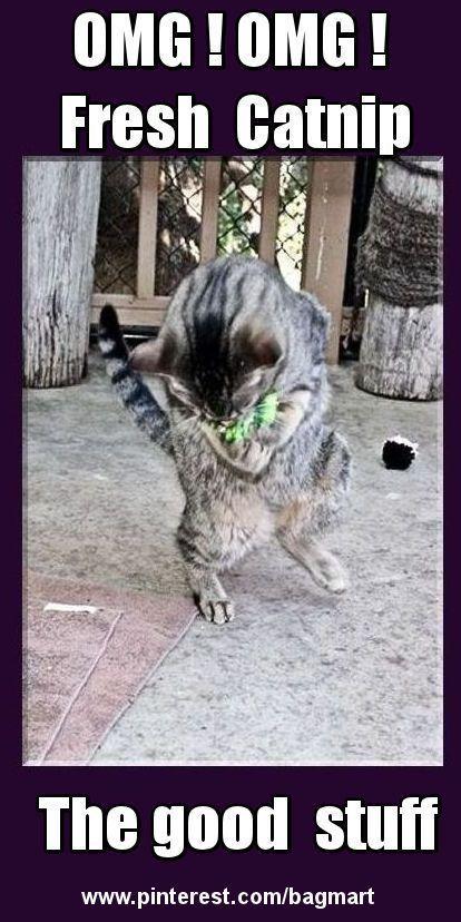 Funny cats https://www.youtube.com/channel/UC76YOQIJa6Gej0_FuhRQxJg