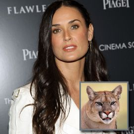 cougar: word used to describe an older woman who is looking for a much younger man. She usually goes to the night clubs, dressed much younger than her age bracket.