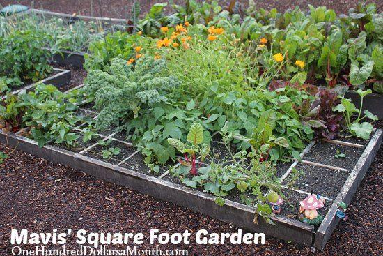 Mavis' Square Foot Gardening Update