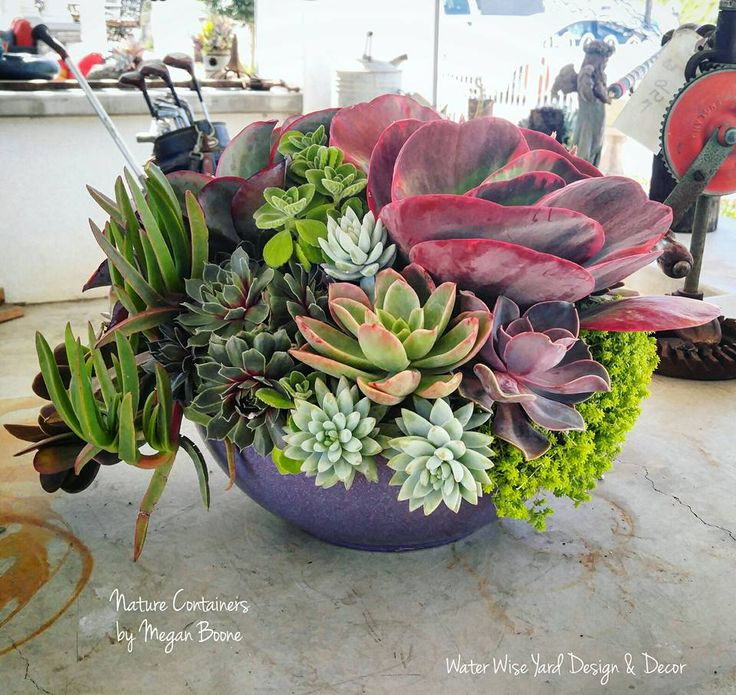 Nice succulent arrangement by Megan Boone