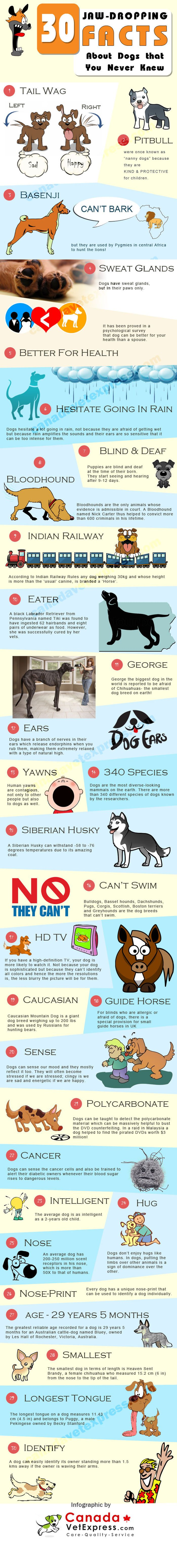 Dogs are quite common pets but similar to other things in nature, nature has filled them with some amazing characteristics that we hardly notice.   Here are 30 most surprising facts about dogs that will make you go wow.