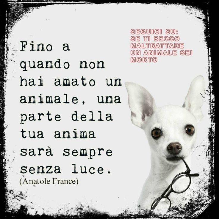 Aforisma sugli animali www.cucciolipazzi.it