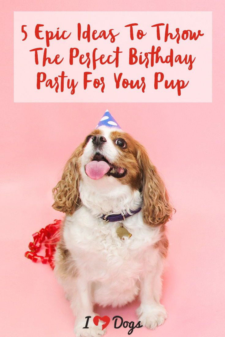 5 Epic Ideas To Throw The Perfect Birthday Party For Your Pup Dog Care Pup Dog Love