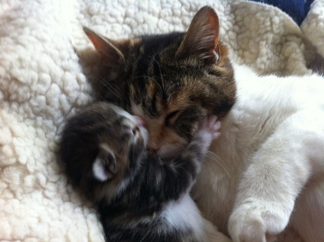 Mommy With Her Little Baby <3