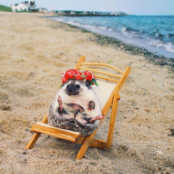 Картинки отдыха на море и пляже смешные, приколы