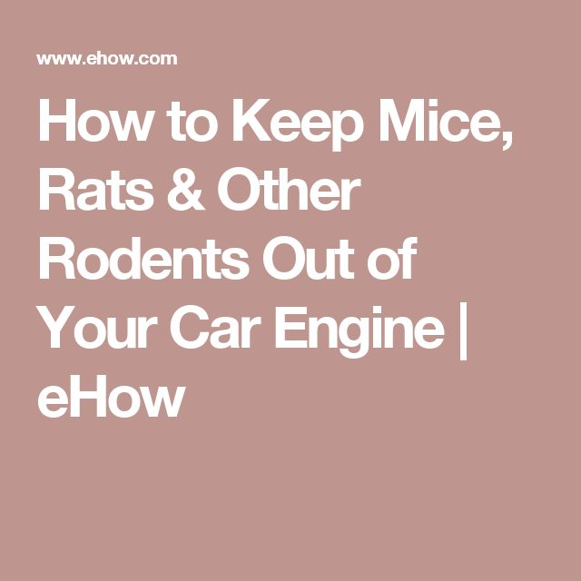 how to keep mice rats other rodents out of your car engine cars other and rodents. Black Bedroom Furniture Sets. Home Design Ideas