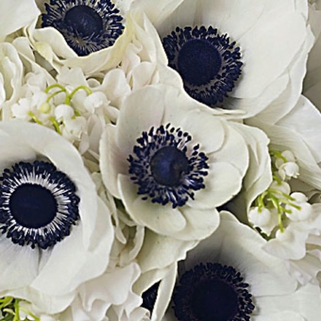 Beautiful for a navy blue and grey wedding