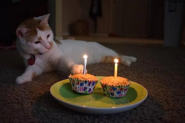 Homemade Birthday Cakes For Cats