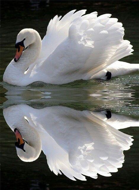 O Branco simboliza tanto ausência de cor como a soma das cores, por isso, ele pode constar nas duas extremidades do círculo cromático, como numa alusão ao início e ao fim. Assim, algumas culturas o usam no luto, porque a morte precede a vida eterna. O branco é uma cor positiva e transmite segurança, limpeza e calma. É a cor da graça, dos anjos e da manifestação divina.
