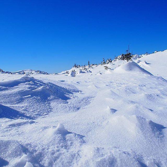 【yuripepe1218】さんのInstagramをピンしています。 《黒斑山から下山してお友達と別れ、翌日は八ヶ岳の北横岳へスノーハイク⛄❄⛄❄ 雲ひとつないピーカン🌞 これぞ八ヶ岳ブルー😍😍😍 お日さまの光で雪もピカピカ✨✨ 風もなくてソロ登山の不安もふっとんじゃう最高の天気😁🌟 2017.01.26 #八ヶ岳#北横岳#冬山#雪山#シュカブラ#雪紋#ハイキング#青空#山#森#空#自然#好山病#登山#山が好き#風景#雪景色#山登り#絶景#アウトドア#八ヶ岳ブルー #winter #snow#bluesky#nature #mountain#climbing#trekking#outdoor#skavla》