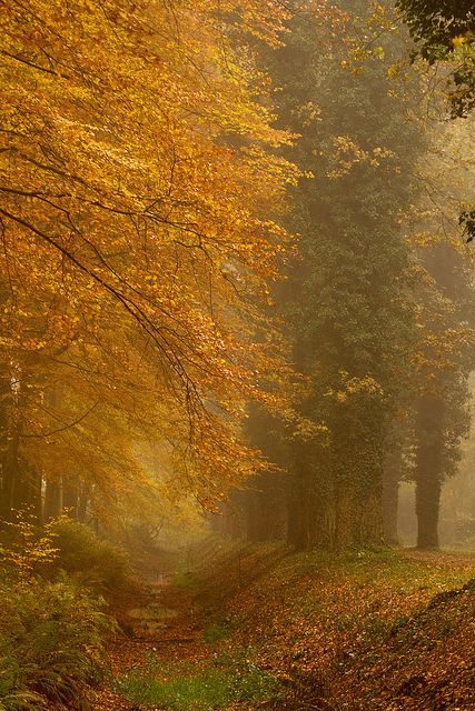 "Overijssel, Netherlands.  ""Everyone must take time to sit and watch the leaves turn."" * explore * by dewollewei, via Flickr"