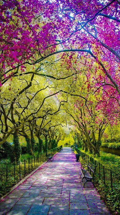 Spring.. Central Park, New York City
