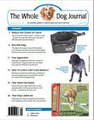 Natural approach to dog health by integrative veterinarians