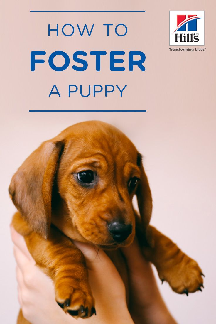 Fostering A Puppy For The First Time Hill S Pet Newborn Puppies Newborn Puppy Care Puppy Care