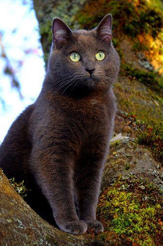 Angora Cat For Sale Chicago