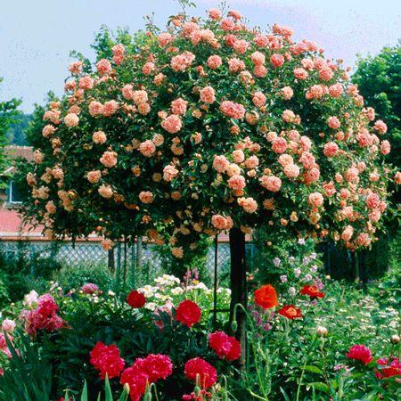 Depósito Santa Mariah: Jardim De Rosas, Faça Um!