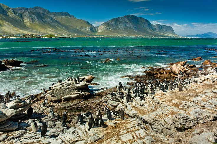 Boulder's Bay, Penguin colony