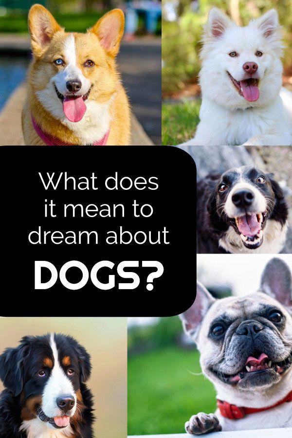 Puppy New Puppy Puppy Training Bringing Puppy Home 12 Ways To