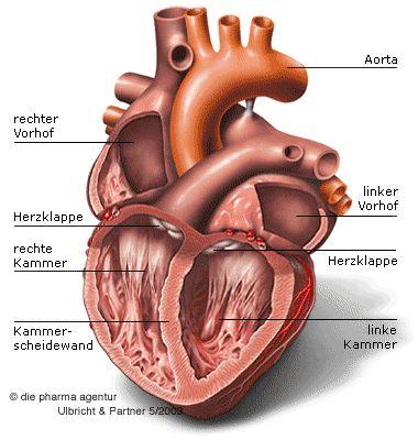 Das Herz (geöffnet)  # marylilianna