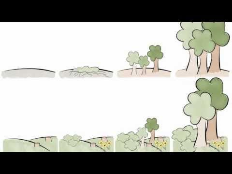 Ecological Succession an educational video for kids