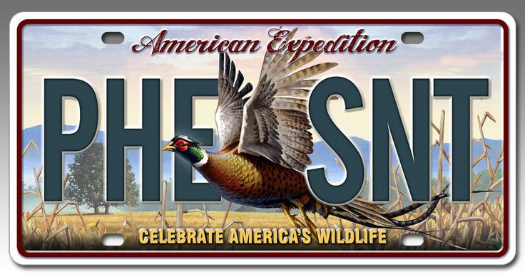 Metal License Plate for Car or Truck - Common Pheasant