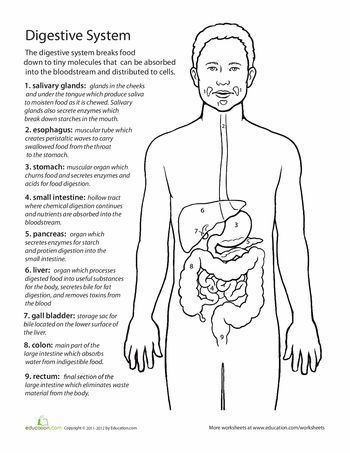108 best Digestion images on Pinterest | Life science, Teaching ...