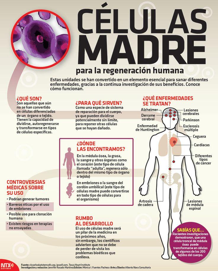 ¿Sabes qué son las células madre y para qué sirven?  #Infographic