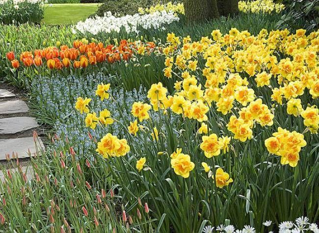 Bulbes de printemps en pots, en rocaille, en prairie ou en massif