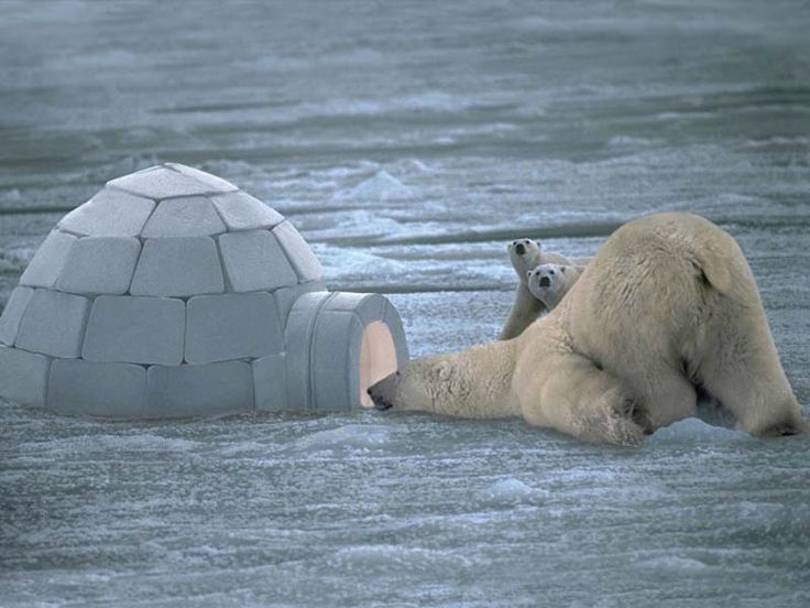 I'm not sure which is more funny; the smiling, spying polar bear, or the children watching from a distance.