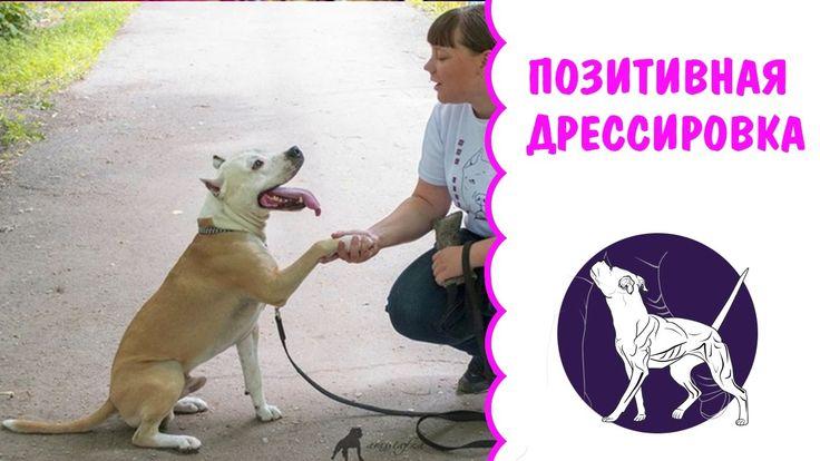 Позитивная дрессировка собак | питбуль | амстафф