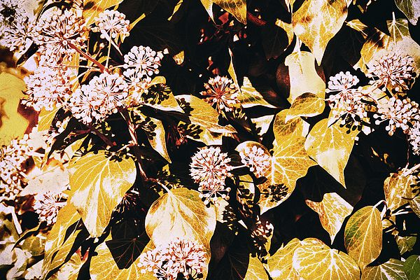 Botany Photograph - Playing Light And Shade  by Irina Safonova#IrinaSafonova#Works #FineArtPhotography #HomeDecor#IrinaSafonovaFineArtPhotography #ArtForHome #FineArtPrints #HomeDecor #Flora#Flower