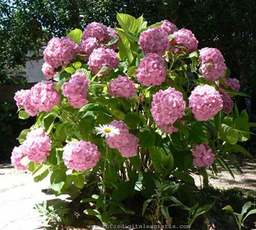 Buscar flores Fotos Digitales Gratis Banco de Imágenes gratuito ...