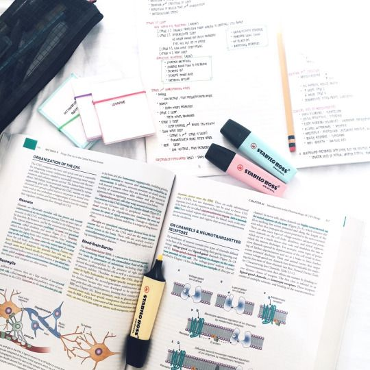 medstudyante: studying & doing my readings for my pharmacology class. i think i'm in love with these pastel stabilo highlighters.