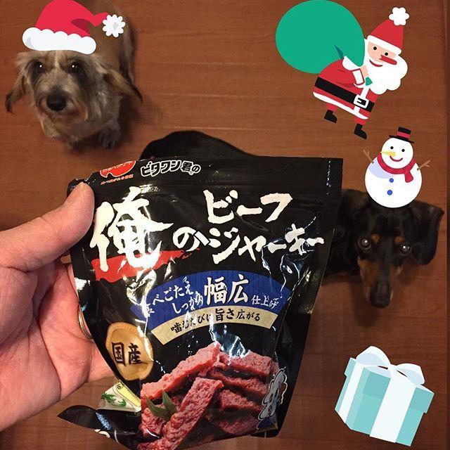 #クリスマス #christmas #クリスマスプレゼント #christmaspresent #愛犬 🐶🐶 #dogs #miniaturedachshund #ミニチュアダックスフンド #大好き #ジャーキー #俺のビーフジャーキー (笑)  #instagram #instagood  #instahappy  愛犬たちに クリスマスプレゼント。 ビーフジャーキー(高級?) 目つきが違う(笑)