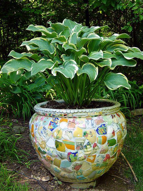 Hostas in a cool pot